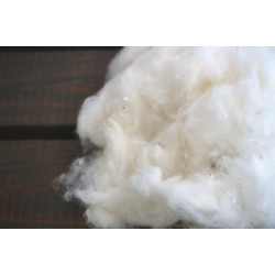 Acala cotton lint